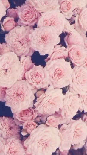 cropped-pink-roses-iphone-wallpaper-wallpaper-pinterest-pinke-rosen.jpg